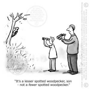 lesser-fewer-spotted-birdwatching-cjmadden